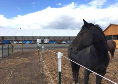Horses arrive to new facility