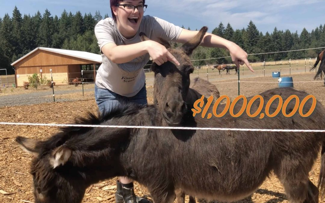 New Video! Donkey Alarm for Sale